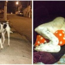 Cachorrinho resgatado das ruas agora é tem o tratamento que merece em seu novo lar