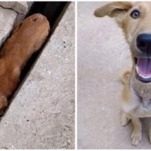 Cachorrinho salvo da rua se recupera e não consegue mais parar de sorrir de gratidão