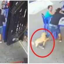Cachorro ataca ladrão que tentou tirar pertences de mulher enquanto ela comia em restaurante
