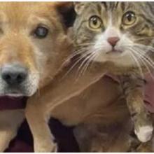 Cachorro cego se recusa a sair do abrigo, não sabe mais viver sem seu gato-guia