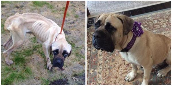 Cachorro desnutrido que foi jogado para fora do carro é adotado e muda drasticamente