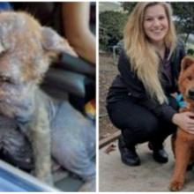 Cachorro encontrado embaixo do carro reclamando de dor se cura completamente e encontra a felicidade