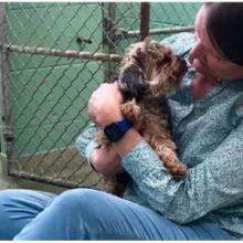 Cachorro foi encontrado a mais de 1.600 quilômetros de distância, 7 anos após seu desaparecimento