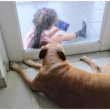 Cachorro idoso forma vínculo lindo com garotinha através do vidro da porta