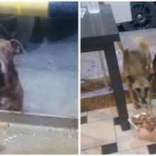 Dono de restaurante prepara refeição grátis para cada cachorro de rua que lhe visita