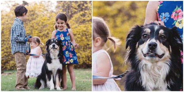 Este cachorro é a 'criança' mais bem comportada durante a sessão de fotos da família