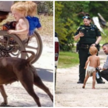 Os cães leais protegem a criança autista de 3 anos na selva, até que as equipes de resgate venham salvá-los