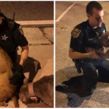 Policiais amáveis resgatam dois pitbulls assustados da rua e se recusam a deixá-los sozinhos até que chegue ajuda