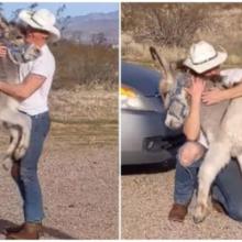 Burro resgatado age como um cachorro quando vê que seu pai está em casa