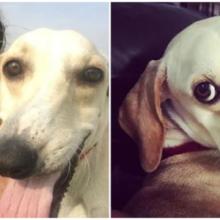 Cachorro de cara torta que se tornou muito popular na Internet graças aos seus vídeos engraçados e curiosos