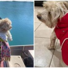 Cachorro encontrado em rio congelante é resgatado e adotado por seu salvador