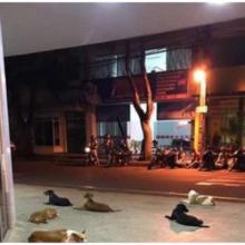 Cachorros chegam ofegantes ao hospital perseguindo a ambulância que levou seu dono