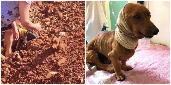 Casal encontra cachorro enterrado vivo e salva sua vida – Um verdadeiro Milagre