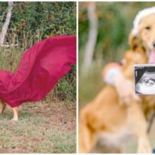 Doce cadela de resgate grávida tem sessão de fotos de maternidade adorável e fica muito feliz