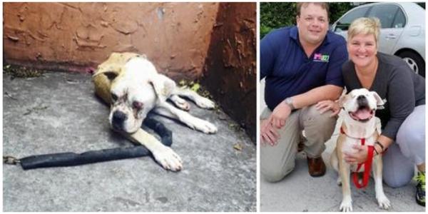 Eles resgatam o cachorro que passou dias acorrentado fora de sua casa após a morte de seu dono