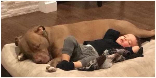 Esse Menino Doente Só Melhora Quando O Seu Pitbull Dorme Com Ele