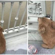 Filhote de cachorro fiel está esperando por seu dono há 4 dias na ponte onde o viu pular