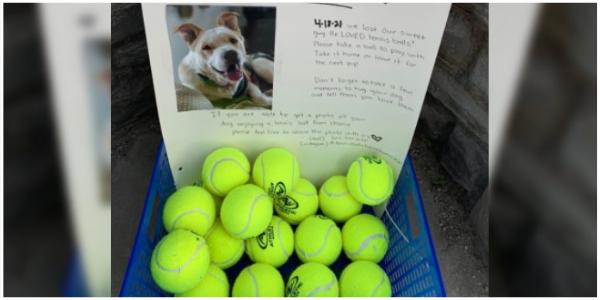 Homem homenageia seu cachorrinho falecido deixando bolas de tênis para cães brincarem