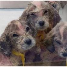 Homem resgata cães à beira da morte e a recuperação é emocionante