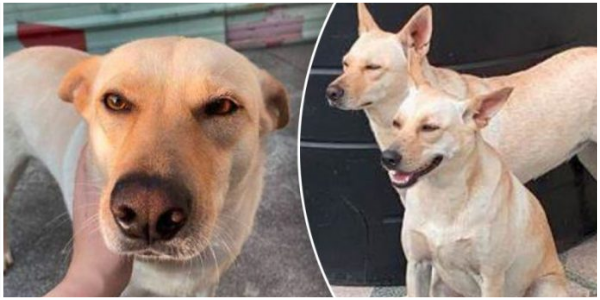 Mulher traz um cachorro para casa por engano e descobre que seu cachorro ficou em casa o dia todo