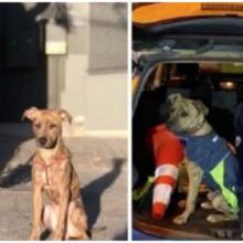 Oficiais adotam um cachorrinho depois de encontrá-lo amarrado e sofrendo na rua