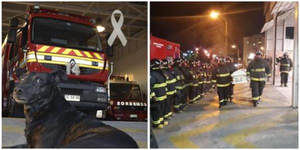 Os bombeiros fizeram uma homenagem emocionante ao melhor companheiro da corporação