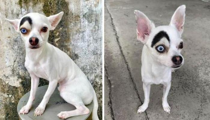 Cachorrinho encanta todos que se aproximam com sua aparência adoravelmente única