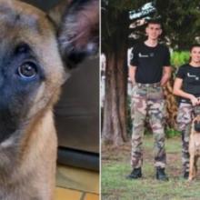 Cachorrinho encontrado em casa abandonada é resgatado e se torna cão farejador