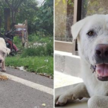 Cachorro que foi resgatado da rua derrotou o câncer e foi adotado por uma mulher carinhosa