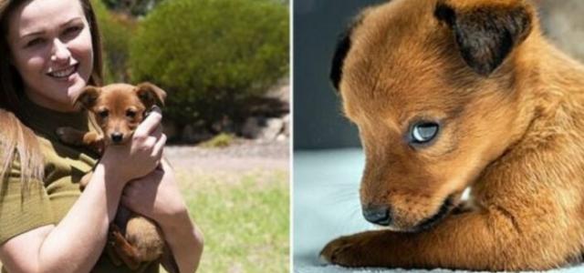 Cachorro encontrado em saco de ração é adotado por equipes de resgate