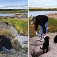 Homem encontra sete cachorrinhos abandonados em uma ilha desabitada