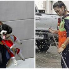 Mulher leva seu cachorro para o trabalho todos os dias para que ele não se sinta sozinho