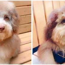 O adorável cachorrinho que tem um rosto humano único
