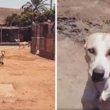 O cão de abrigo cego sempre corre quando ouve a voz do seu melhor amigo