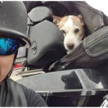 O motociclista vê um cachorrinho sendo abusado na beira da estrada e salva sua vida