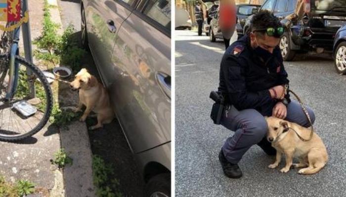 Policial salva cachorro que foi deixado em um poste ao sol e o adota para sempre