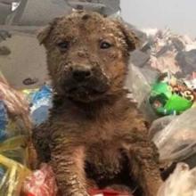 Um cachorro abandonado em um aterro encontra uma família amorosa que merece